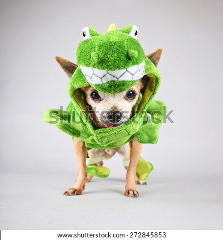 a cute chihuahua dressed up in a green dinosaur or a lizard costume isolated on a : chihuahua dinosaur costume  - Germanpascual.Com