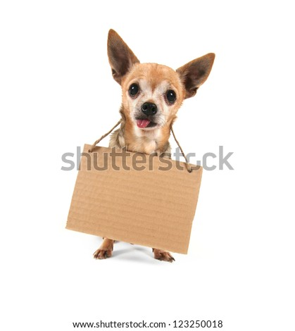a cute chihuahua holding a homeless or will work sign