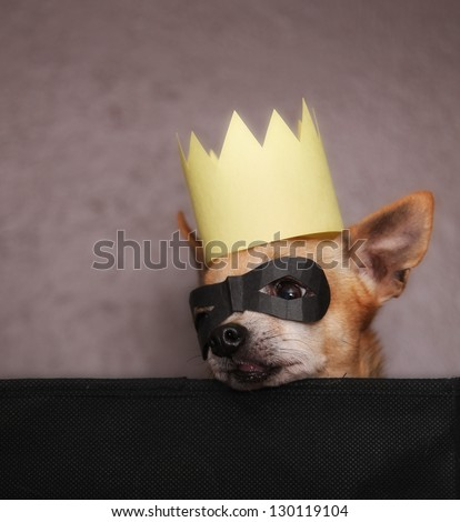 a cute  chihuahua with a crown and mask on - stock photo