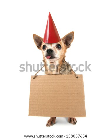a cute  chihuahua with a sign and a party hat on