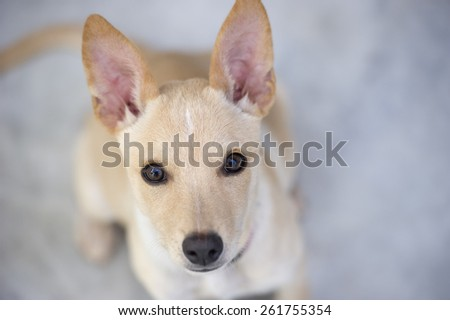 A cute curious puppy is looking up. - stock photo