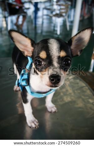 a cute dog - stock photo