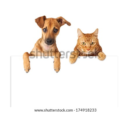 A cute dog and cat hanging over a blank white sign for you to enter your message on