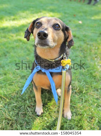 a cute dog at a local park - stock photo