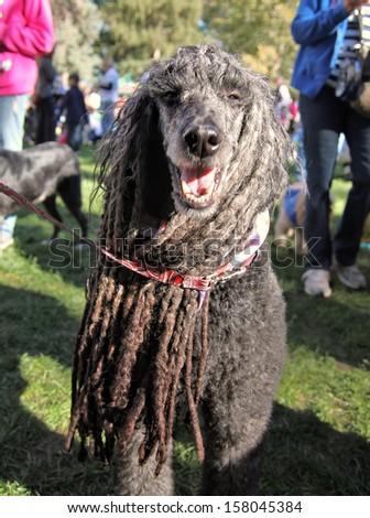 a cute dog at a local park - stock photo
