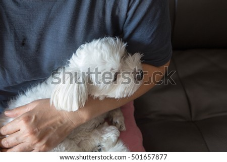 A cute Dog, little Maltese in woman's bosom.