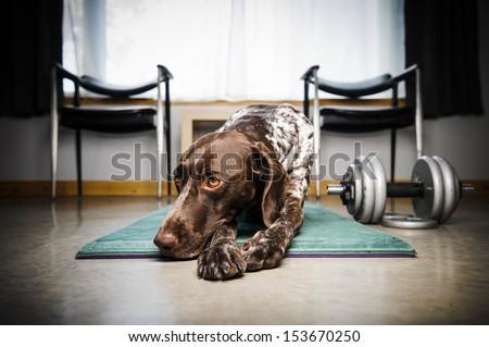 a cute dog on a workout mat  - stock photo