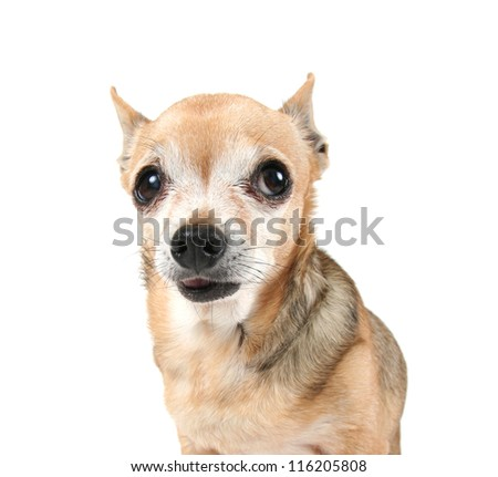 a cute dog on an isolated white background - stock photo