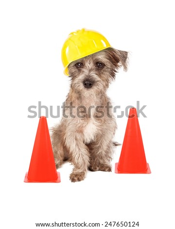 A cute dog sitting in front of construction cones wearing a yellow hard hat - stock photo