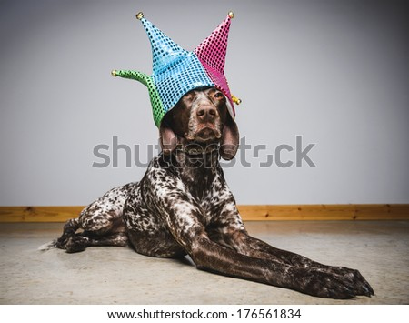 a cute dog wearing a funny party hat - stock photo