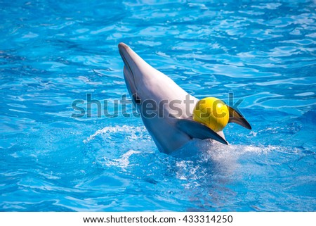 a cute dolphins during a speech at the dolphinarium. - stock photo