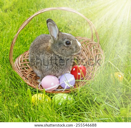 a cute easter rabbit in a basket - stock photo