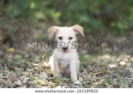 A cute happy adorable puppy is sitting in the forest sticking his tongue out. - stock photo