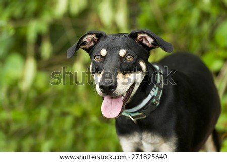A cute happy dog is smiling with a nicely blurred outdoor green background - stock photo