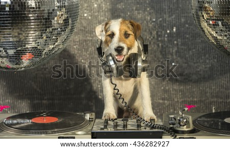 a cute jack russell dog with turntable djing, a disco setting. Dj Woof