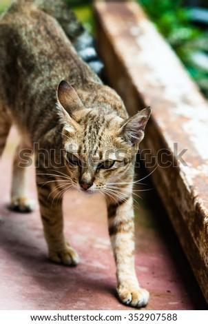 A cute kitten - stock photo