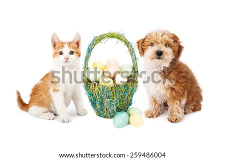 A cute kitten and puppy dog sitting next to a pretty straw Easter basket filled with colorful eggs - stock photo