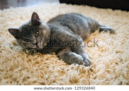 a cute kitten laying on carpet - stock photo