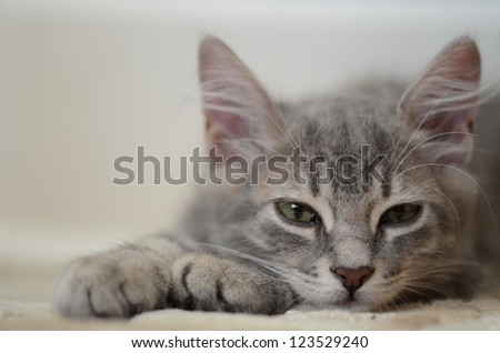 a cute kitten lying on floor - stock photo
