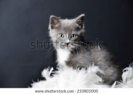 a cute kitten or cat sitting in some feathers on an isolated black background - stock photo