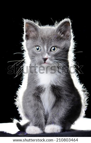 A cute kitten or cat sitting on a black cloth with an isolated black background - stock photo