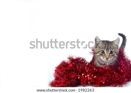 A cute kitty playing in holiday garland. White space suitable for holiday cards and designs. - stock photo
