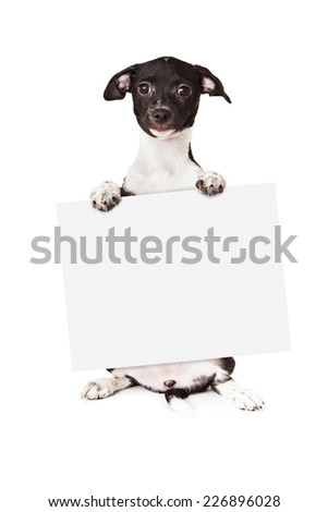 A cute little black and white mixed breed puppy sitting up and holding a blank sign while looking at the camera. Isolated on a white background.  - stock photo