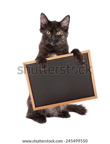 A cute little black kitten standing on hind legs holding a blank chalk board - stock photo