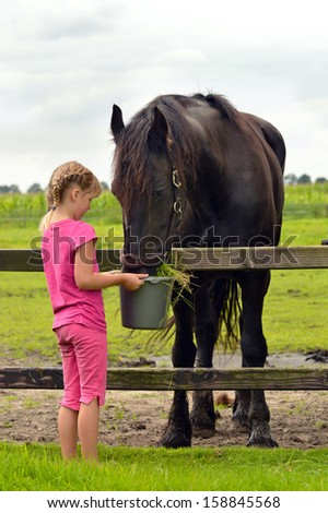 A cute little girl with a braid feeding a big black Friesian horse with a bucket of grass - stock photo