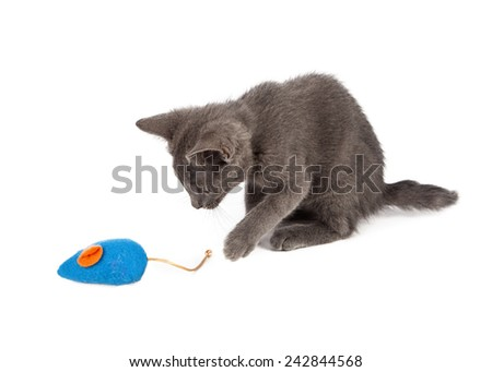 A cute little gray kitten raising his paw to play with a toy stuffed mouse - stock photo