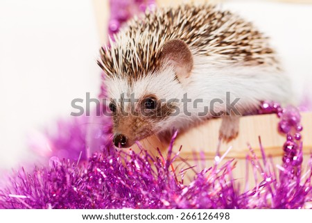 A cute little hedgehog with Christmas decorations