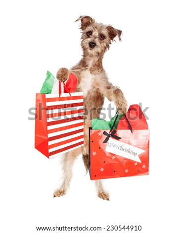 A cute little mixed terrier dog standing while carrying Christmas present bags - stock photo