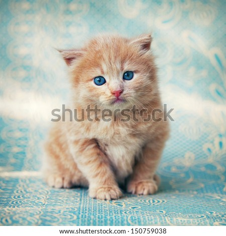 A cute little red kitten on a blue background.  - stock photo