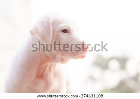 A cute lover puppy dog. - stock photo