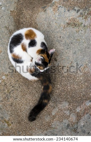 A cute mixed-breed cat grooming itself on a rock. Outdoors portrait of domestic cat. Color image - stock photo