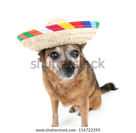 a cute puppy - stock photo