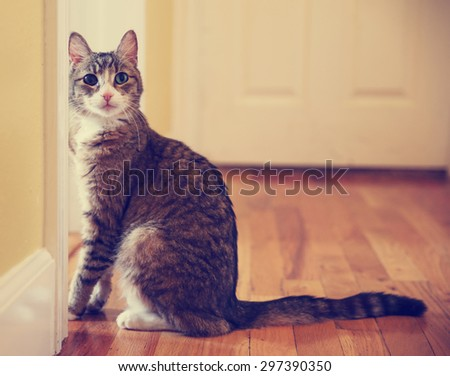 a cute small cat or kitten looking at the camera sitting in a hallway with natural light toned with a retro vintage instagram filter app or action effect  - stock photo