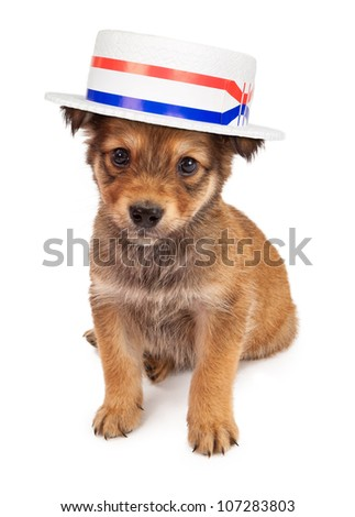 A cute tan color eight week old puppy puppy sitting against a white backdrop and wearing a politician hat
