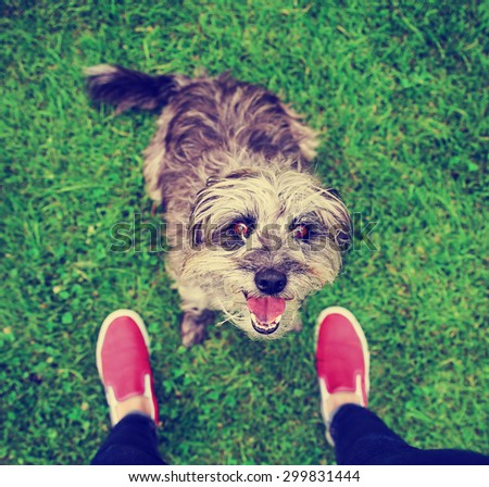 a cute terrier mix begging for a treat in a park or backyard lawn with very green grass toned with a retro vintage instagram filter effect app or action - stock photo