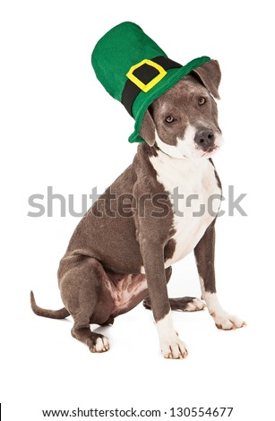 A cute terrier mixed breed dog wearing a tall green St. Patrick's Day hat