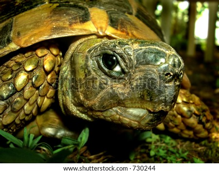 A cute turtle looking at  the camera - stock photo
