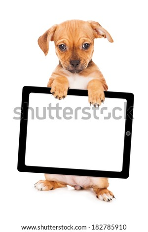 A cute young mixed small breed puppy standing up and holding a blank computer tablet device - stock photo