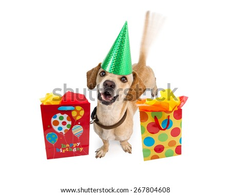 A cute young puppy dog wearing a birthday hat next to colorful gift bags. Intentional motion blur from a wagging tail. Isolated on white.
