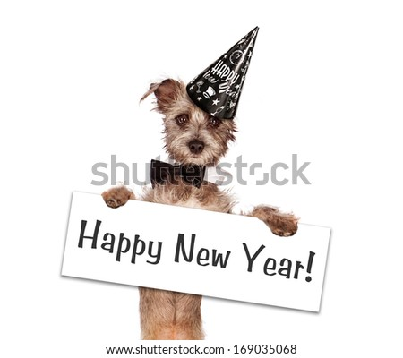 A cute young terrier mixed breed puppy dog against a white backdrop wearing a party hat holding a Happy New Year sign - stock photo