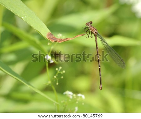 A damsel fly perched on a plant.