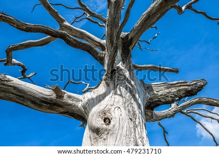 A dead, bare tree against a blue sky.