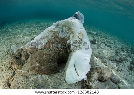 A dead Blacktip reef shark (Carcharhinus melanopterus) lies in the shallows where fishermen through the carcass after taking the animal's fins.  The fins will be sold for soup in Asia. - stock photo