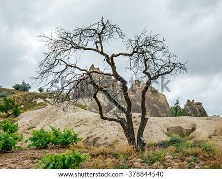 A dead tree. Cappadocia in Central Anatolia is a UNESCO World Heritage Site since 1985, Turkey.