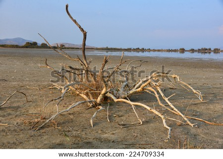 A dead tree on a dry lake bed in Kos, Greece.  - stock photo
