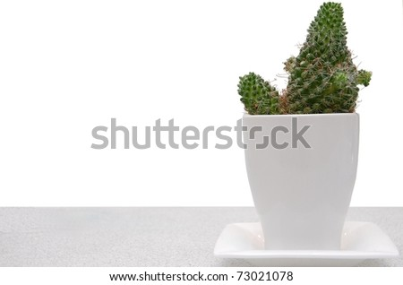 A Decorative Cactus in a White Pot on a Shelf with Room for Text - stock photo
